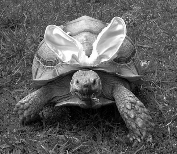 Picture of the tortoise from Aesop's fable of the tortoise and the hare and the modern portfolio theory.